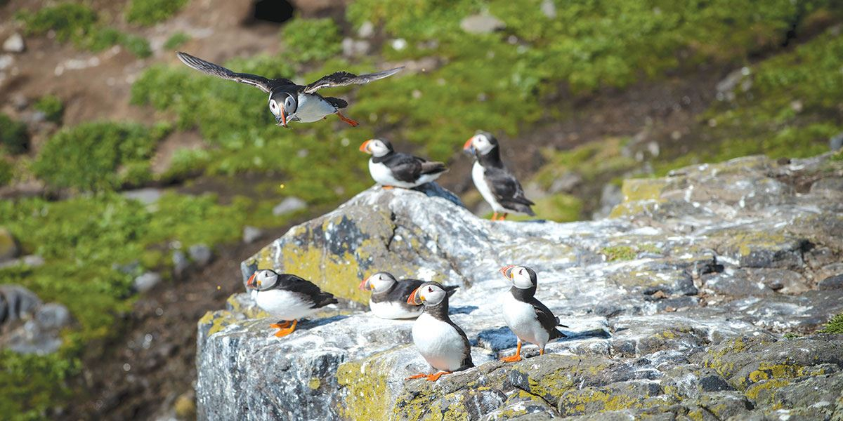 See the wonderful puffins on thew Isle of May