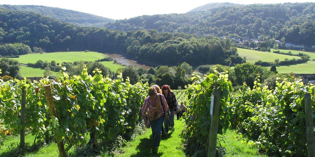 Take a tour of Parva Farm Vineyard
