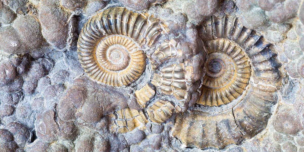 Visit Durdle Door and discover prehistoric fossils from 185 million years ago