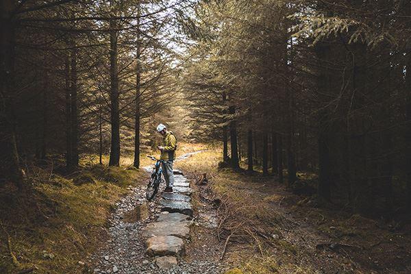 Biking through Grizedale Forest