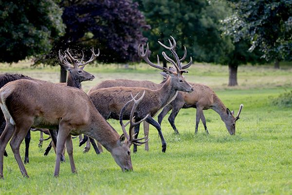 See deer in Wollaton Park