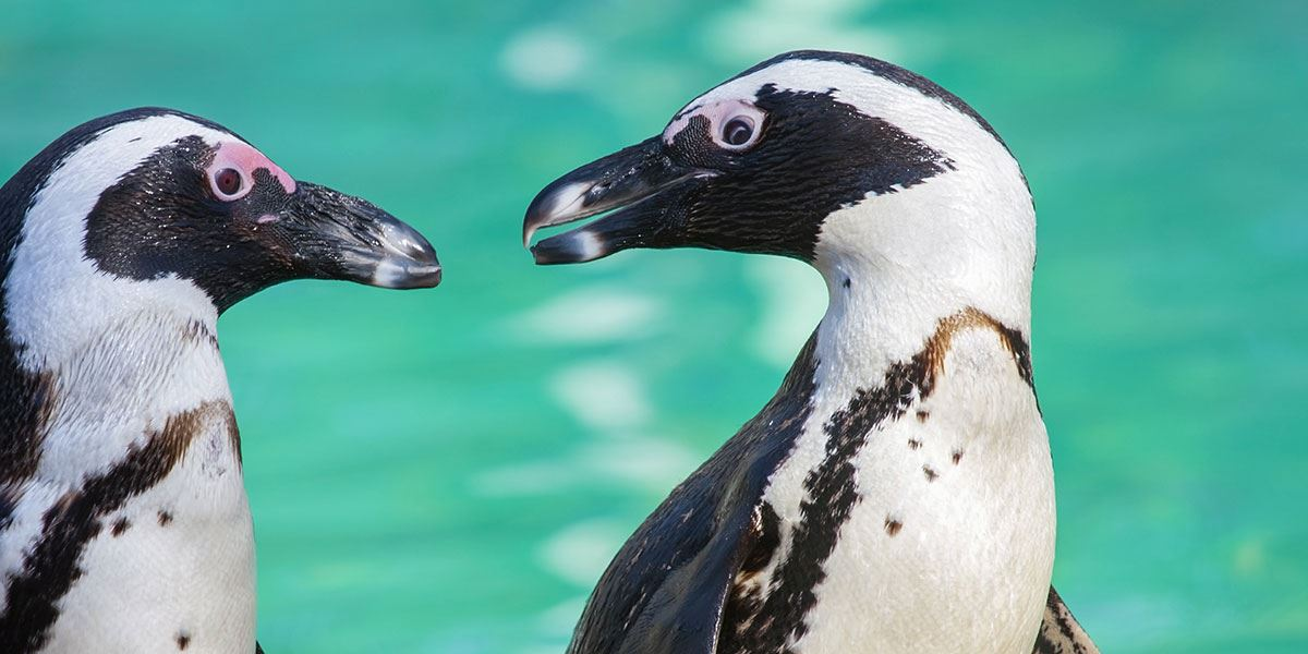 Get up close and personal with the animals at Marwell Zoo