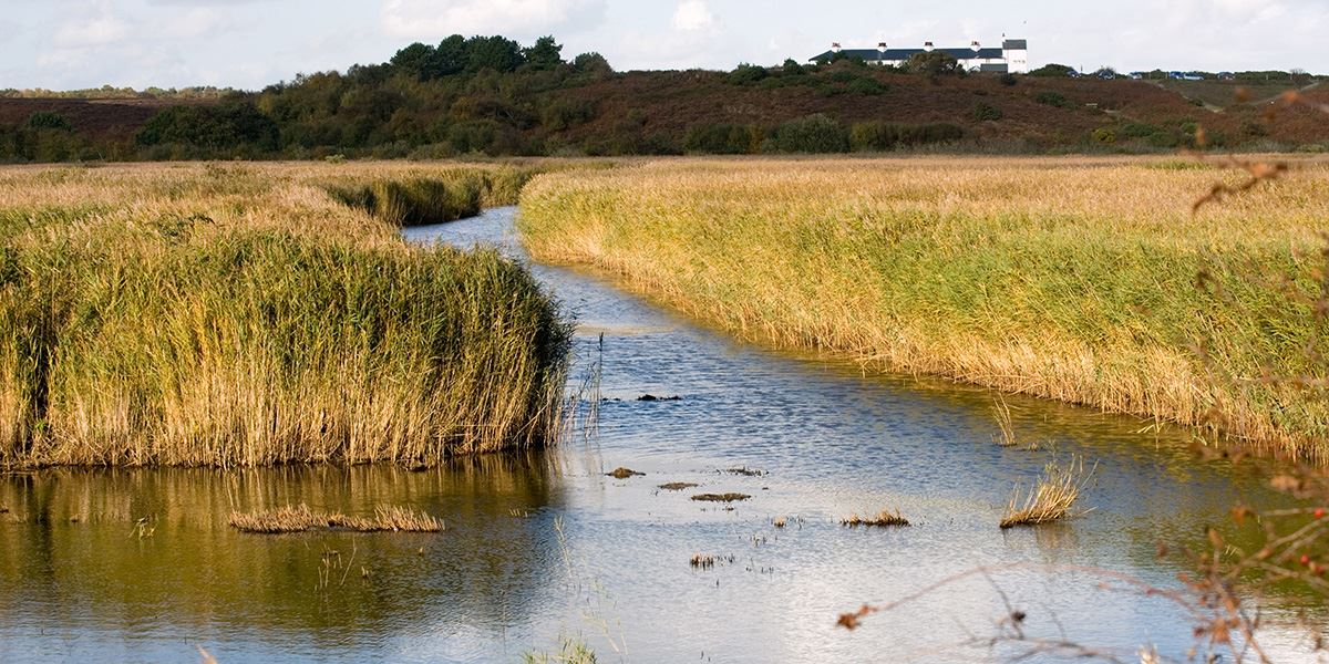 Enjoy time on Suffolk's peaceful wetlands