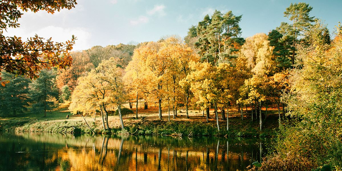 Winkworth Arboretum in autumn is a must-visit attraction all year round