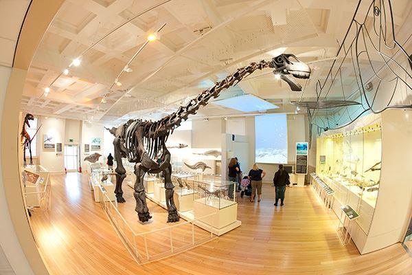 Dinosaur at the New Walk Museum