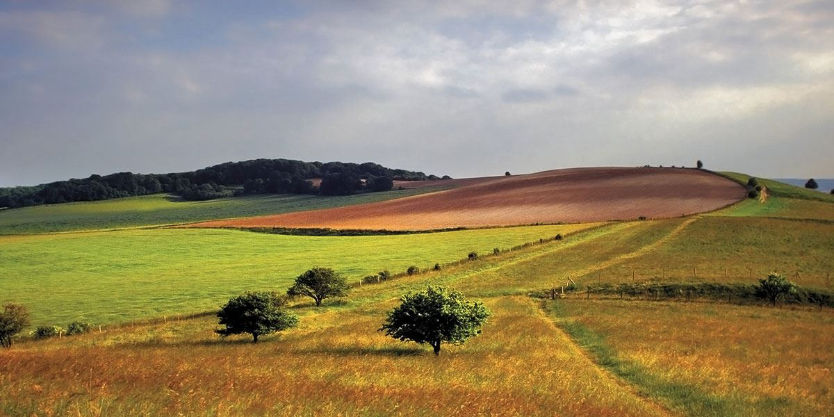 Discover the beauty of the Chilterns