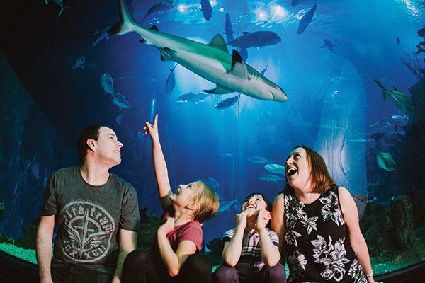 Enjoy a day out with the whole family at The Deep