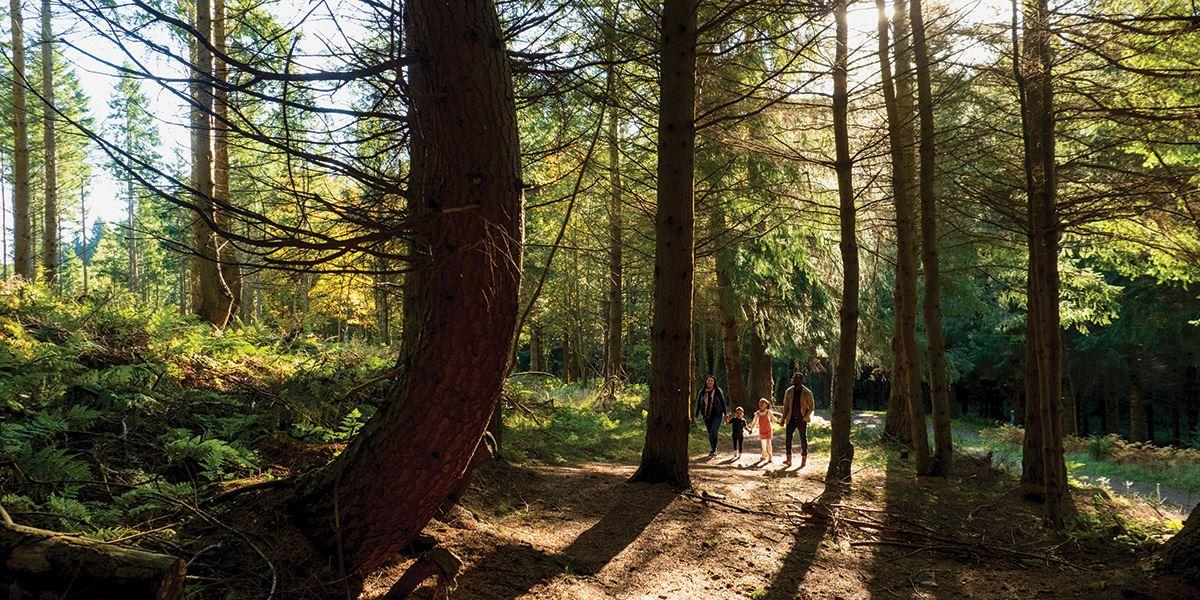Glentress Forest
