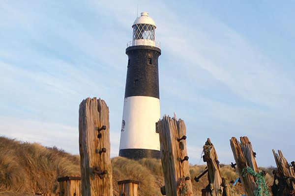 Take a trip to Spurn Point to see some wonderful wildlife