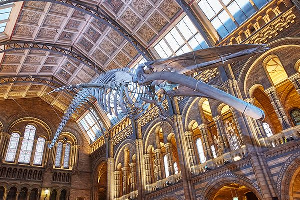 See the blue whale at Kensington's Natural History Museum