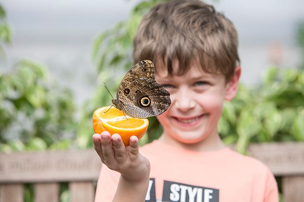 Sensational Butterflies exhibition at the Natural History Museum