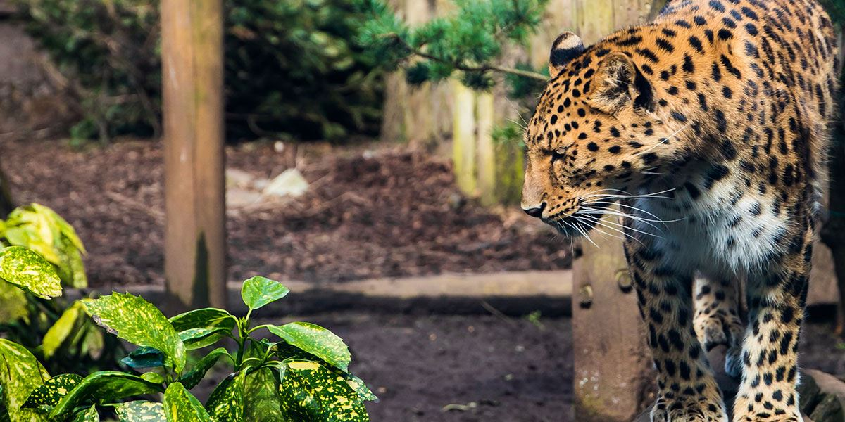 Enjoy a day out with the family at Twycross Zoo in Leicester