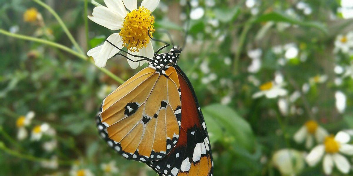 Get closer to nature at the Stratford Butterfly Farm