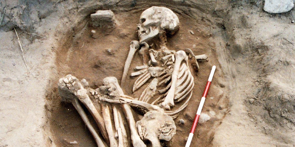 Bowl Hole skeleton
