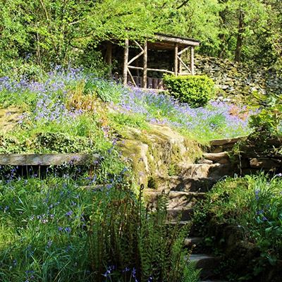 Bluebells at Dove Cottage