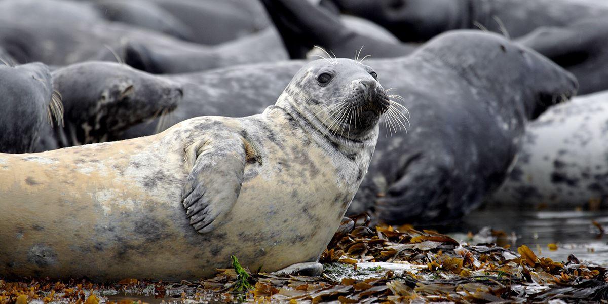 Seals are a popular sight along the coast