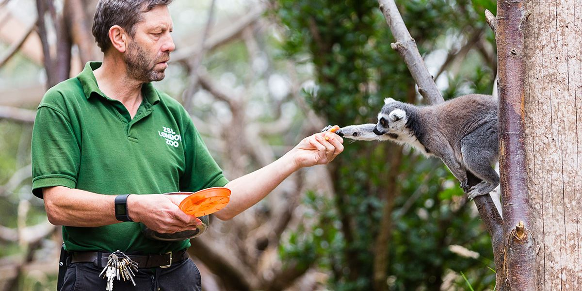 Watch how the animals are fed at ZSL London Zoo