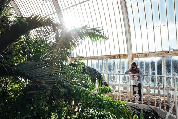 Rainforest in Palm House at Kew, London
