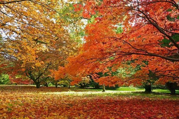 Westonbirt Arboretum in Autumn in Gloucestershire