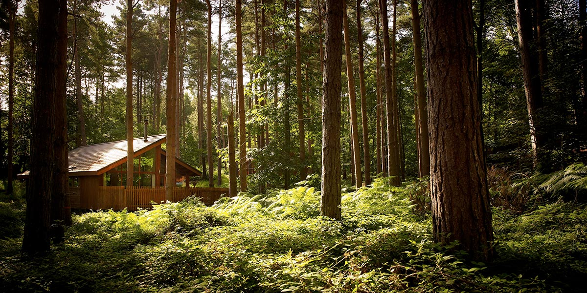 Forest Holidays' cabin in Sherwood Forest