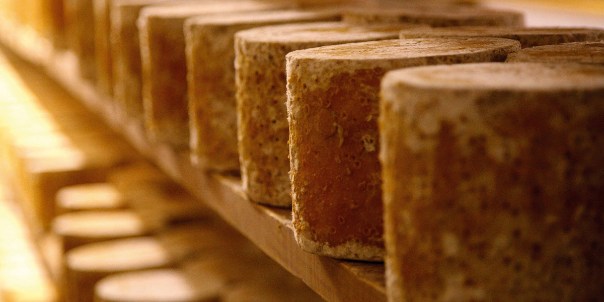 Cheese at Colston Bassett Dairy in Nottinghamshire