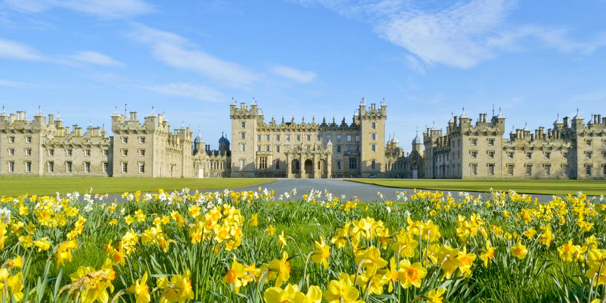 Floors Castle in the Scottish Borders, with daffodils in the foreground