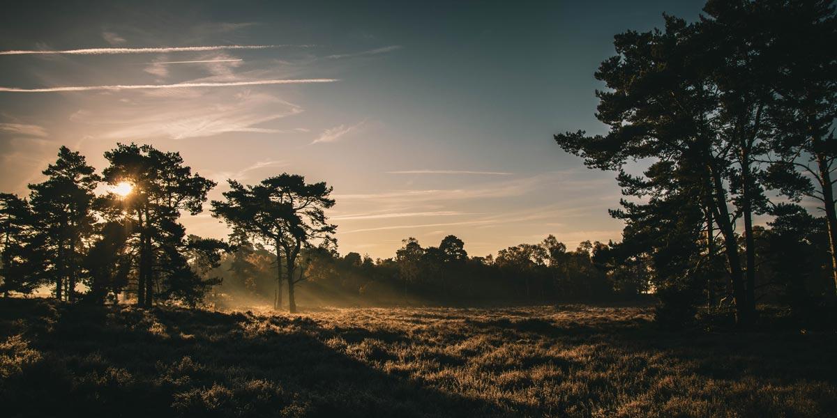 Rendlesham Forest in Suffolk