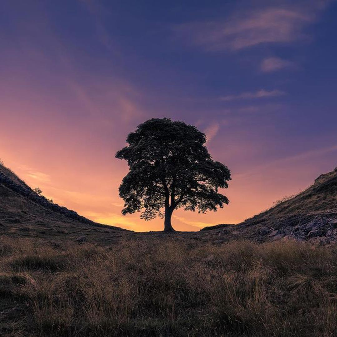 Sycamore Gap, Northumberland, England