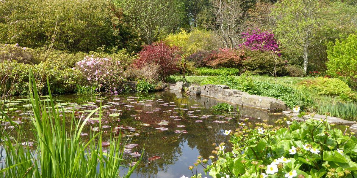 Pond at St Andrews Botanic Garden